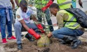 CSD-Tree planting 750